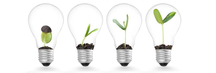 Plant shoots growing inside lightbulbs